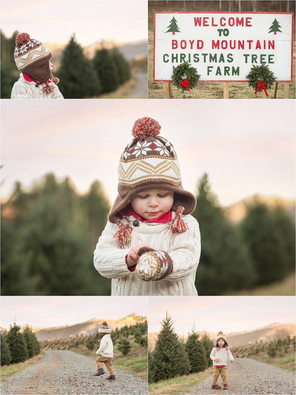 Tree Farm Detour | North Carolina, Boyd Mountain Christmas Tree ...